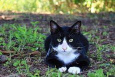 Hati-hati, 8 Hal Ini Sangat Tidak Disukai Kucing
