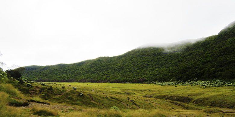 Alun-alun Surya Kencana di Gunung Gede.