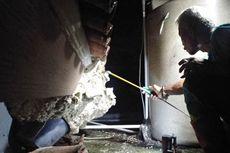 Ada Sarang Tawon Vespa Raksasa di Atap Rumah Warga, Petugas Damkar Kesulitan Musnahkan