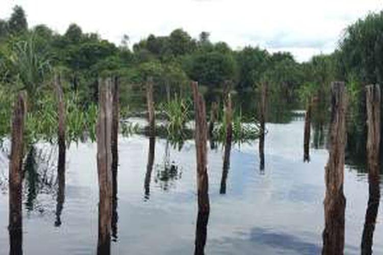 Taman Nasional Sebangau di Kalimantan Tengah masuk dalam tiga wilayah yakni Kota Palangkaraya, Kabupaten Katingan, dan Kabupaten Pulang Pisau.