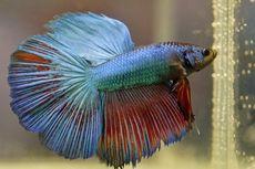 8 Jenis Ikan Aquascape yang Bisa Mempercantik Akuarium