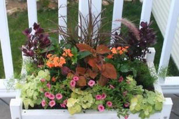 Mengetahui kebutuhan tanaman, kondisi tanah dan instensitas penyiraman, sangat menentukan kesegaran dan kesehatan tanaman dalam pot.