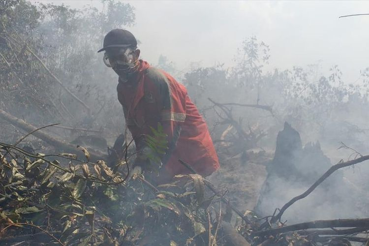 Seorang anggota Manggala Agni Daops Siak memadamkan api dengan mesin pompa air pada kebakaran lahan gambut di Desa Dayun, Kecamatan Dayun, Kabupaten Siak, Riau, Senin (5/8/2019).
