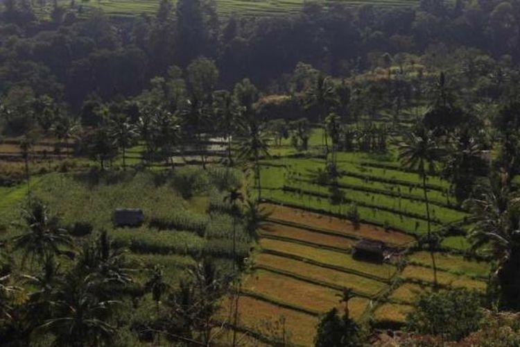 Ilustrasi lahan pertanian
