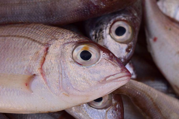 Ilustrasi mata ikan segar.