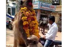 Anak Monyet Ini Peluk Induknya yang Sudah Mati