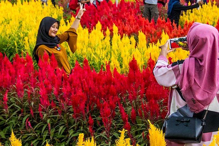 Pengunjung berfoto di Taman Bunga Celosia Ragil Kuning, Simo, Boyolali.