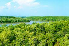 Kerusakan Hutan Mangrove Indonesia Tertinggi di Dunia, Ini 3 Aspek Penting Rehabilitasi