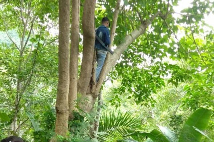 Foto : Warga Desa Detuwulu, Kecamatan Marole, Kabupaten Ende, Flores, NTT panjat pohon untuk dapat sinyal, Minggu (9/3/2020).