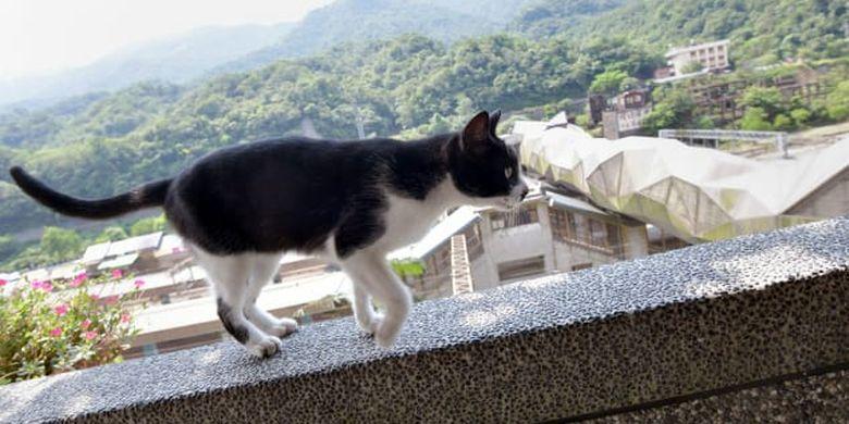 Houtong, desa kucing di Taiwan.