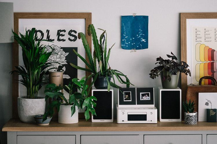 Ilustrasi tanaman hias di dalam ruangan, tanaman hias indoor.