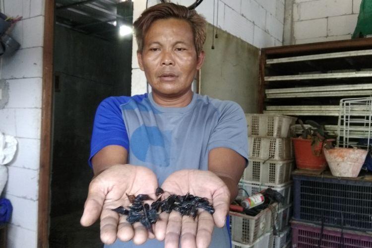 Muhammad Arifin (43), jagal ular kobra asal Dusun Tunggul Moro, Desa Kutoporong, Kecamatan Bangsal, Kabupaten Mojokerto, Jawa Timur, menunjukkan beberapa empedu ular kobra. Sejak 6 tahun lalu, pria yang akrab disapa Cak Bulus ini menggeluti bisnis empedu ular kobra.