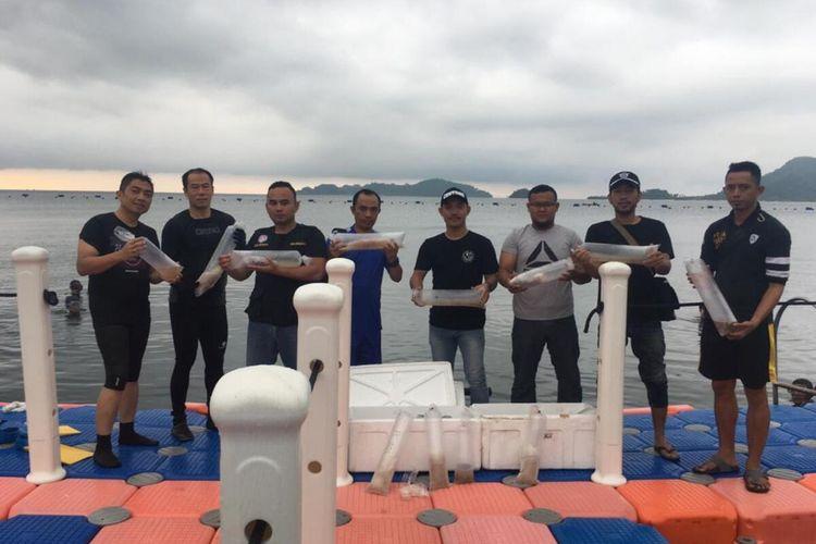 17.640 baby lobster yang gagal diselundupkan ke Singapura lantaran terdeteksi mesin X Ray ketika berada di Bandara Sultan Mahmud Badaruddin II Palembang, Sumatera Selatan, saat dilepaskan di peraian, Lampung, Kamis (21/1/2020).
