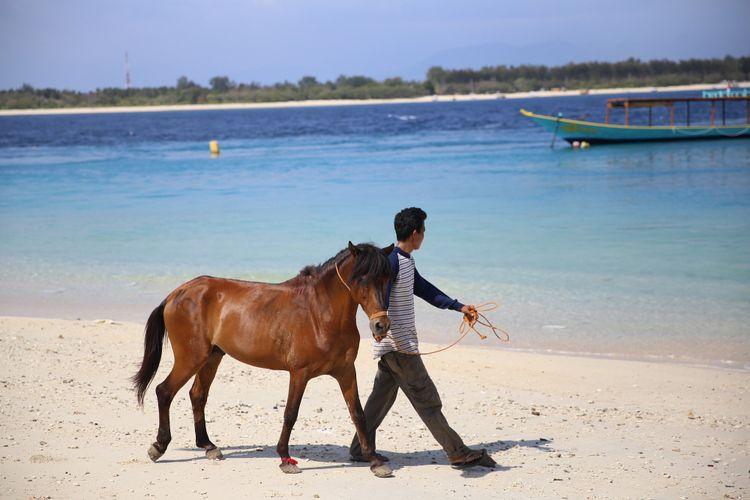 Seorang warga membantu menuntun kuda yang hendak dievakuasi dari Pulau Gili Trawangan menuju Pulau Lombok, Nusa Tenggara Barat, Kamis (9/8/2018). Kuda-kuda ini ditinggalkan pemilik dan penjaga setelah rentetan gempa mengguncang kawasan ini dengan gempa utama pada Minggu (5/8/2018).