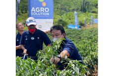 Petani Cabai di Aceh Utara Gelar Panen Perdana, Bukti Efektivitas Program Agrosolution PT Pupuk Indonesia