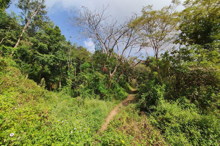 Kawasan hutan di Jalan Tembus Selogiri-Manyaran.