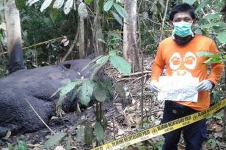 Bangkai gajah liar yang ditemukan dengan kepala dan gading yang hilang di Kawasan Hutan Desa Teupin Panah, Kecamatan Kawai XVI, Aceh Barat, diduga merupakan ulah pemburu gading gajah profesional.