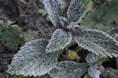 Cuaca di Gunung Bromo Minus 3 Derajat Celsius, Muncul Embun Upas