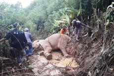 BKSDA Temukan Gajah Terluka di Pedalaman Kota Langsa