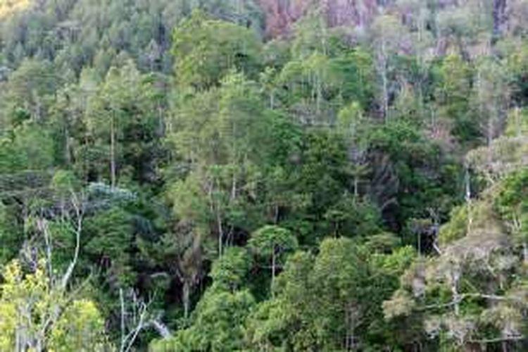Hutan Gorontalo di blok Popayato Paguat sudah direkomendasikan untuk program Restorasi Eksostem Burung Indonesia. Program ini pertama di Gorontalo dan kedua di Indonesia oleh lembaga nirlaba pelestari burung liar