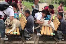 Jadi Gemuk karena Pensiun, Mantan Anjing Polisi Ini Terjepit di Bangku Taman