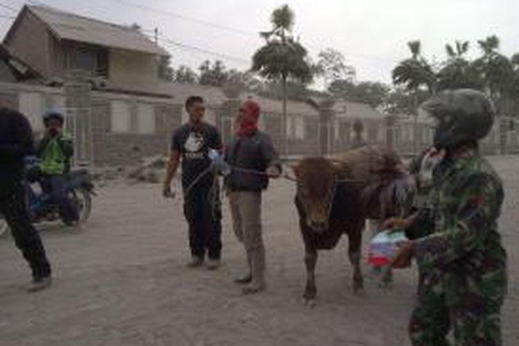 Tim dari Profauna dan warga saat melakukan evakuasi ternak sapi di Desa Selorejo, Ngantang, Kabupaten Malang. Sabtu (15/2/2014).