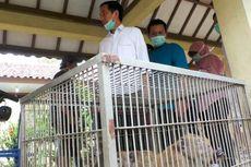 Jokowi Lepas Liarkan Monyet di Kepulauan Seribu