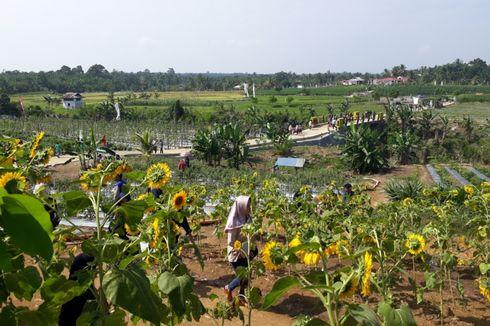 Foto-foto hingga Belajar jadi Petani, Wisata Baru di Bengkulu Selatan