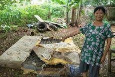 Sejak Awal Tahun, Damkar Tangsel Tangkap Hampir 50 Ular di Permukiman Warga