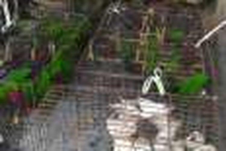 141 Satwa dilindungi jenis burung kakatua diamankan petugas dari Dinas Pertanian Perkebunan dan Kehutanan (DPPK) dan Polsek Morotai, Maluku Utara Senin (14/3/2016)