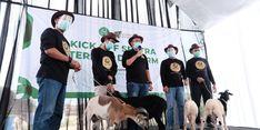Pada 2020, Dompet Dhuafa Distribusikan Lebih dari 42.000 Hewan Kurban