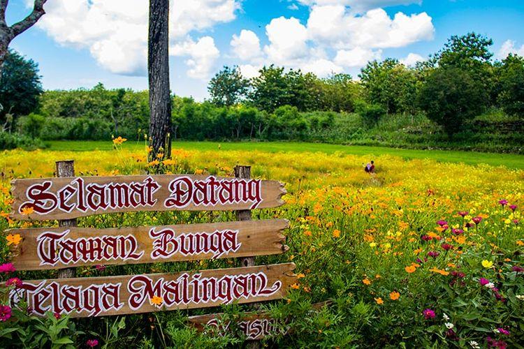 Taman Bunga Telaga Malingan, Gunungkidul (02/02/2019).