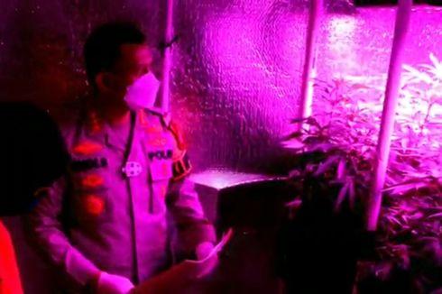 Pria Ini Pasang Lampu Sinar Ultraviolet untuk Tanam Ganja dalam Rumah