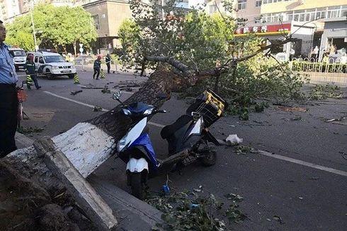 Di Lhoknga, Seorang Pesepeda Motor Tewas Tertimpa Pohon Tumbang