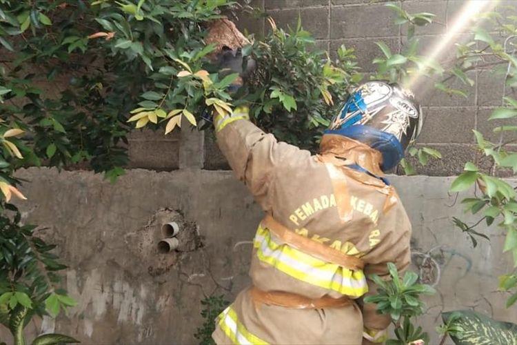 Lakban melilit pakaian fire jacket pemadam kebakaran ketika mengevakuasi sarang tawon guna menutup celah yang dapat disusupi tawon.