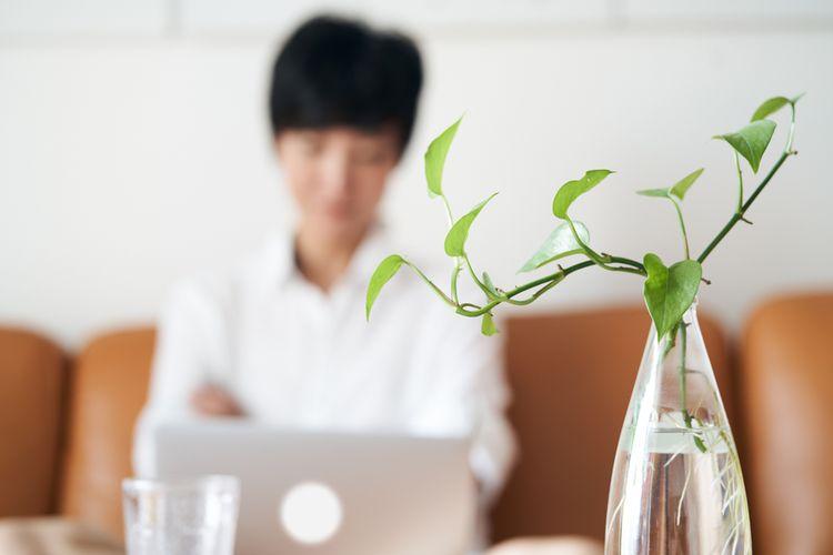 Ilustrasi tanaman dalam ruangan