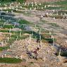 Satgas: Angka Kematian Covid-19 di Indonesia 4,35 Persen, Rata-rata Dunia 3,5 Persen