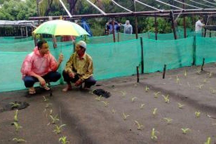 Peserta Konvensi Calon Presiden Partai Demokrat Anies Baswedan, saat bertemu dengan petani di Pantai Pandansimo, Bantul, DI Yogyakarta, Sabtu (21/12/2013).