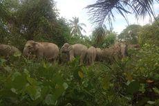 14 Ekor Gajah Masuk ke Perkampungan Warga