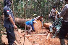 Pencurian Kayu di TN Tesso Nilo Riau Berlangsung Sebulan, Pelaku Masih Buron