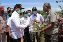 Produksi Tasela Babel Naik 3 Kali Lipat, Gubernur Erzaldi: Ini Adalah Berkah bagi Tanah Kita