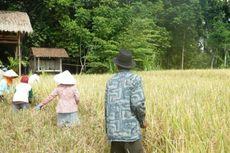 OJK: Di Negara Maju, Asuransi Gagal Panen Sifatnya Wajib