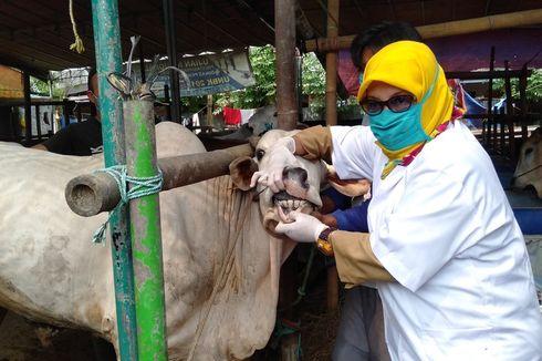 Webinar UNS: Ini Cara Memeriksa Hewan Kurban Berikut Penyembelihannya