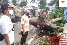Pohon Tumbang di Cempaka Putih, Timpa 2 Motor dan Pagar Rumah