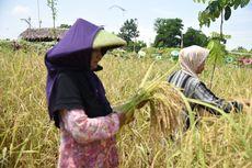Sektor Pertanian di Sumedang Tak Terpengaruh Pandemi Covid-19