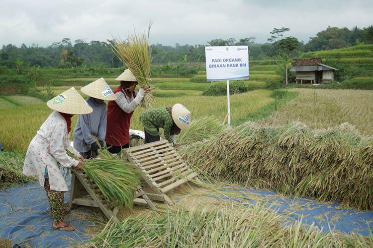BRI Salurkan Rp 161 Triliun Kredit Mikro untuk Sektor Pertanian.