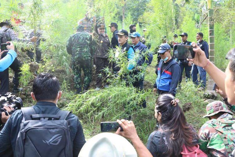 Badan Narkotika Nasional (BNN) RI memusnahkan sembilan hektar ladang ganja dengan berat sekitar 35 ton di Desa Jurong dan Desa Sawang, Kecamatan Sawang, Kabupaten Aceh Utara, Selasa (6/4/2021).
