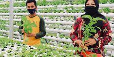 Program Hidroponik Sayur Inalum Cukupi Kebutuhan 430 Jiwa Masyarakat Desa Kuala Tanjung