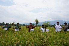 Magelang Termasuk Penyuplai Beras Organik Terbanyak di Indonesia