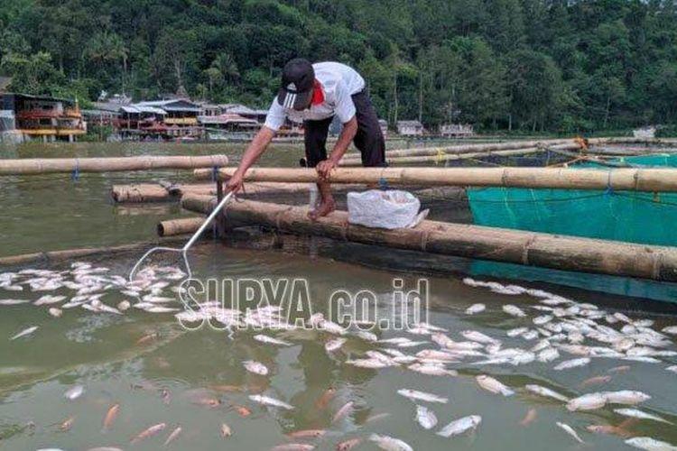 Sejumlah ikan nila mati mendadak karena kandungan gas belerang di dasar Telaga Ngebel, Ponorogo.